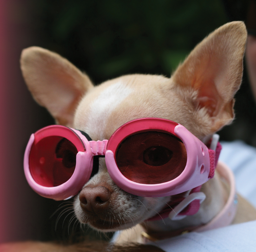 Dog With Pink Goggles With Background