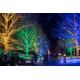 Thousands of outdoor lights make the grounds come alive at Longwood Gardens