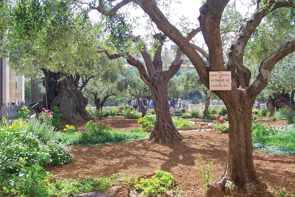 The Garden of Gethsemane where Christ spent his last hours.
