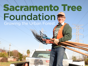 Sacramento Tree Foundation Growing the Urban Forest