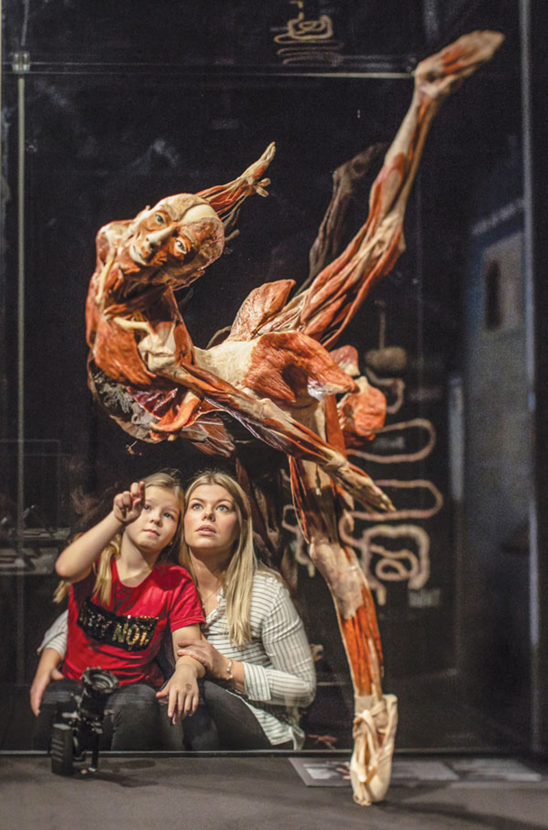 Great Lakes Science Center To Open Body Worlds Rx Exhibit On March 20 Today S Family Magazine