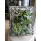 A framed vertical succulent garden Photo by  Karel Ulizio