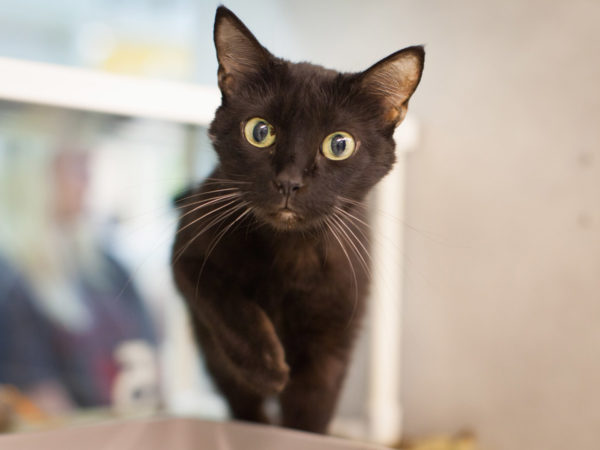 Nebraska Humane Society black cat