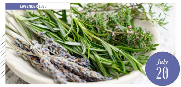 Dried lavender and other herbs