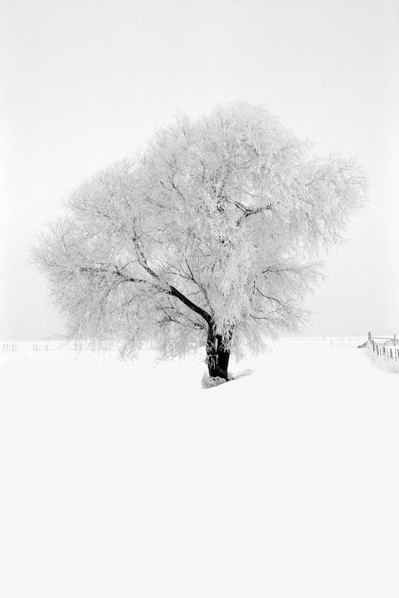 Winter-Tree_OP