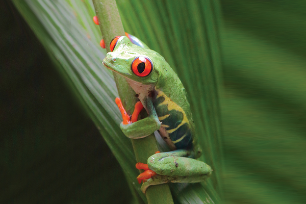 Tree frog in rain forest