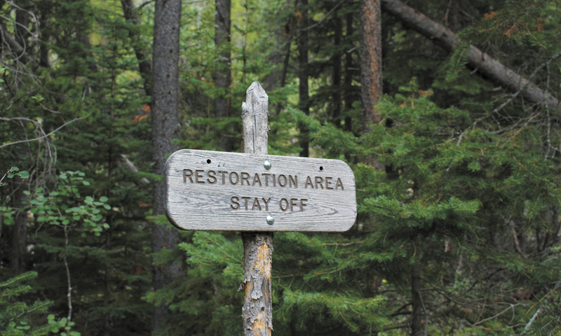 Forest Restoration Area
