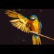 The Care of Birds as Pet Companions