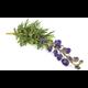 Aconitum napellus scisettiAdobeStockcom